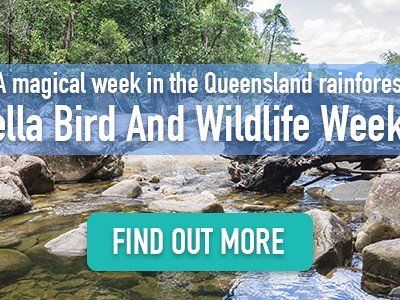 Eungella Bird and Wildlife Week